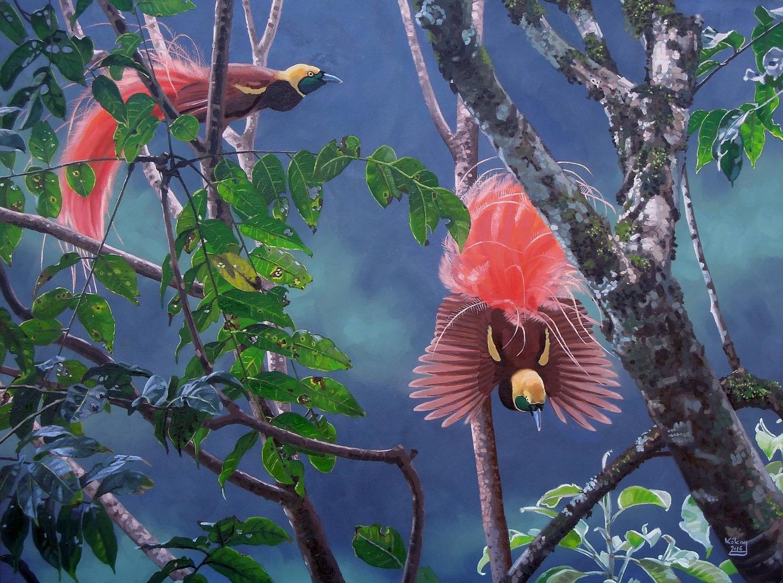 Raggi-Paradiesvogel © S. Kókay